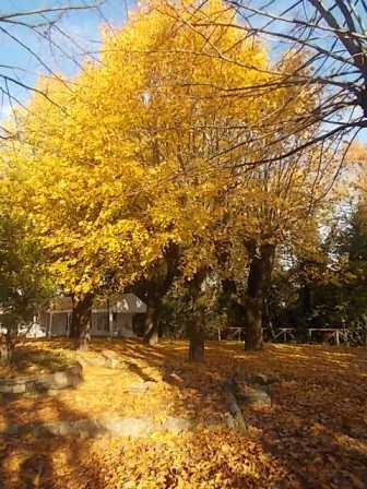 radda in chianti autunno (12)