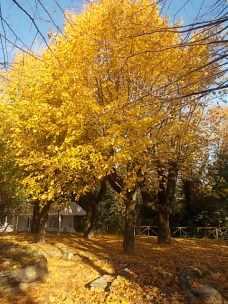 radda in chianti autunno (13)