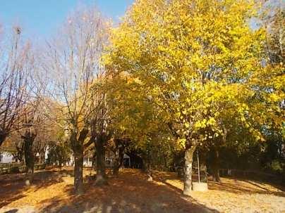 radda in chianti autunno (14)
