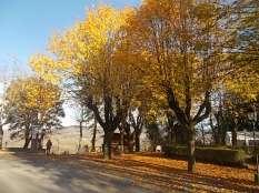 radda in chianti autunno (7)