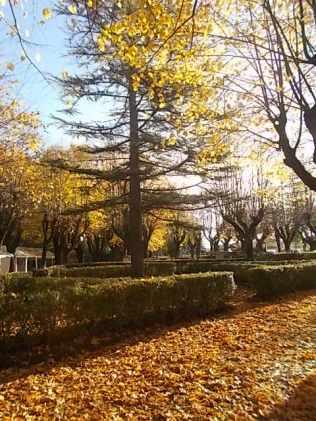 radda in chianti autunno (9)