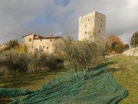 vertine raccolta olive 2017 (16)