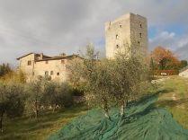 vertine raccolta olive 2017 (18)