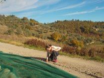 vertine raccolta olive (4)
