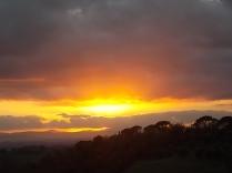 pecore, crete senesi, tramonto (14)