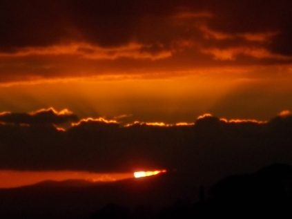 pecore, crete senesi, tramonto (15)