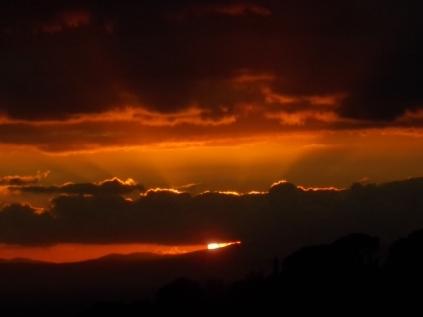 pecore, crete senesi, tramonto (16)