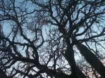 querce spoglie vertine (12)