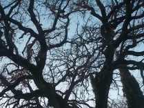 querce spoglie vertine (13)