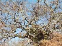 querce spoglie vertine (2)