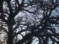 querce spoglie vertine (21)