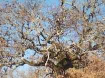 querce spoglie vertine (3)