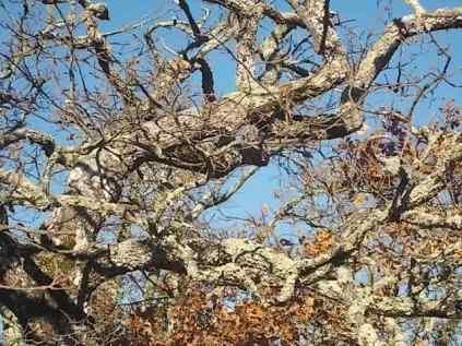 querce spoglie vertine (4)
