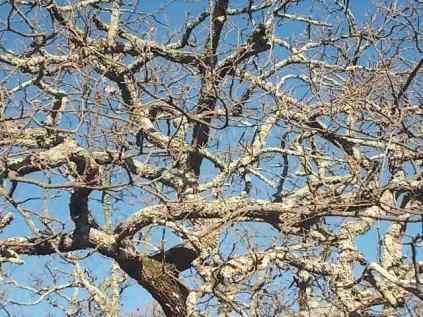 querce spoglie vertine (5)