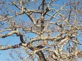 querce spoglie vertine (6)