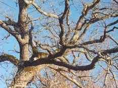 querce spoglie vertine (8)
