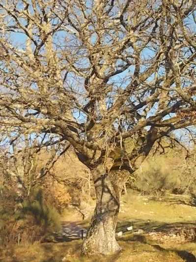 querce spoglie vertine (9)