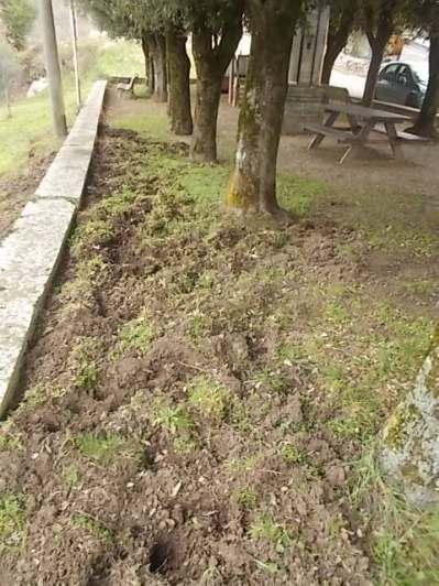 vertine aratura cinghiali monumentoai caduti (1)