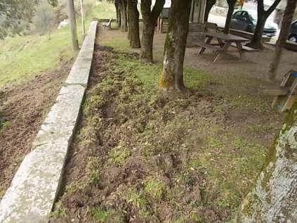 vertine aratura cinghiali monumentoai caduti (2)