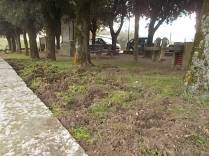 vertine aratura cinghiali monumentoai caduti (3)