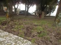 vertine aratura cinghiali monumentoai caduti (4)