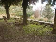 vertine aratura cinghiali monumentoai caduti (7)