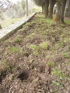 vertine aratura cinghiali monumentoai caduti (9)