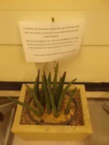 furto piante immunologia oncologica siena (1)
