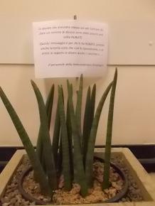 furto piante immunologia oncologica siena (4)