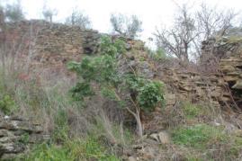 geranio ad alberello castello di montecchio (6)