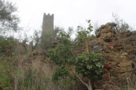 geranio ad alberello castello di montecchio (7)