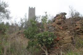 geranio ad alberello castello di montecchio (8)
