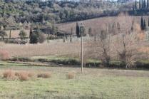 montalcino, le vigne non recintate del brunello (1)