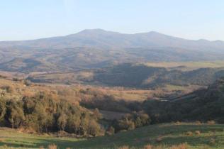 montalcino, le vigne non recintate del brunello (11)