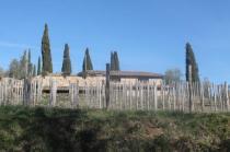 montalcino, le vigne non recintate del brunello (16)