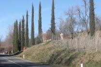 montalcino, le vigne non recintate del brunello (17)