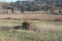 montalcino, le vigne non recintate del brunello (6)