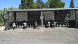 murales castellina scalo (2)