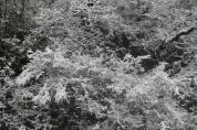 neve 3 febbraio montegrossi e badia a coltibuono, chianti (12)