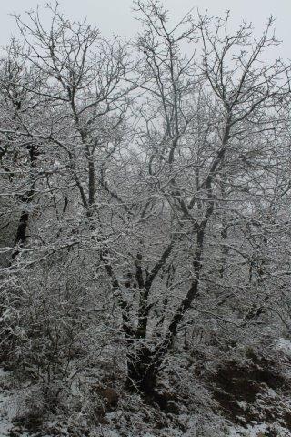 neve 3 febbraio montegrossi e badia a coltibuono, chianti (14)