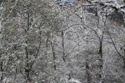 neve 3 febbraio montegrossi e badia a coltibuono, chianti (15)