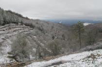 neve 3 febbraio montegrossi e badia a coltibuono, chianti (18)