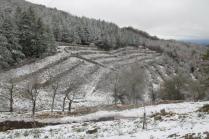 neve 3 febbraio montegrossi e badia a coltibuono, chianti (19)