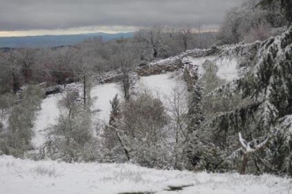 neve 3 febbraio montegrossi e badia a coltibuono, chianti (22)