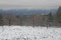 neve 3 febbraio montegrossi e badia a coltibuono, chianti (33)