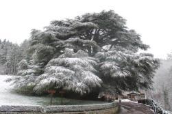 neve 3 febbraio montegrossi e badia a coltibuono, chianti (34)