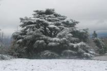neve 3 febbraio montegrossi e badia a coltibuono, chianti (37)