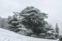 neve 3 febbraio montegrossi e badia a coltibuono, chianti (41)