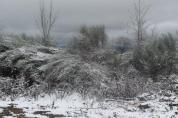 neve 3 febbraio montegrossi e badia a coltibuono, chianti (8)