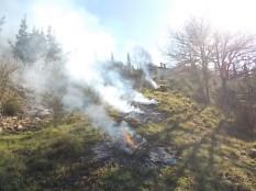vertine il crepitare del fuoco con le ginestre (1)